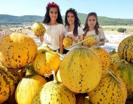Urla'da kavun festivali bugün başladı