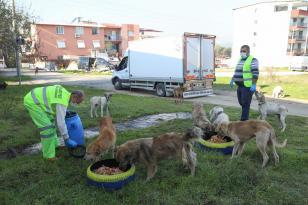Sokak hayvanlarına bayramda mama desteği –4 günde 1 ton mama