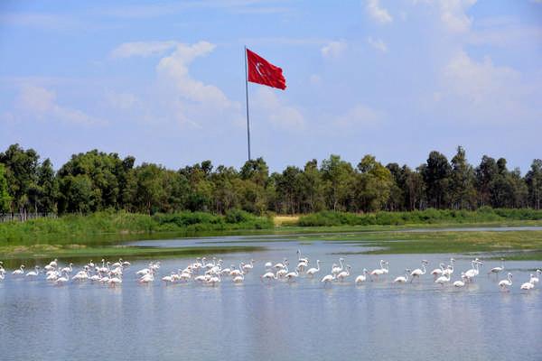 Aliağa'nın Flamingolarından Kartpostallık Görüntüler